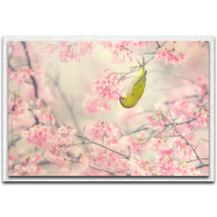 """""""Cherry Blossom Color"""" 22x32x1 Modern Farmhouse Floral Art on Metal with Parchment Frame by Takashi Suzuki at PristineAuction.com"""