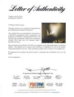 Muhammad Ali Signed Everlast Boxing Glove (PSA LOA) at PristineAuction.com