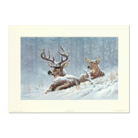 """Larry Fanning Signed """"Bedded Down - Whitetail Deer"""" Limited Edition 16x10 Lithograph (PA LOA) at PristineAuction.com"""