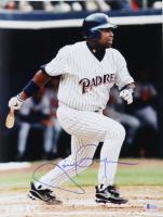 Tony Gwynn Signed Padres 11x14 Photo (Beckett COA) at PristineAuction.com