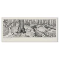 "Charles Lynn Bragg Signed ""Redwood Study #1"" 12x4 Original Pencil Drawing at PristineAuction.com"
