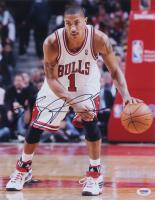 Derrick Rose Signed Bulls 11x14 Photo (PSA COA) at PristineAuction.com