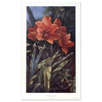 "Diane Garrick Scholze Signed ""Paradise Garden-Amaryllis"" Limited Edition 17x28 Lithograph at PristineAuction.com"